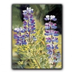 Arctic Lupine Greeting Card