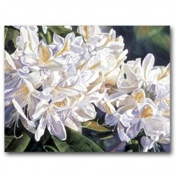 White Rhododendron, Lavender Shadows - Greeting Cards